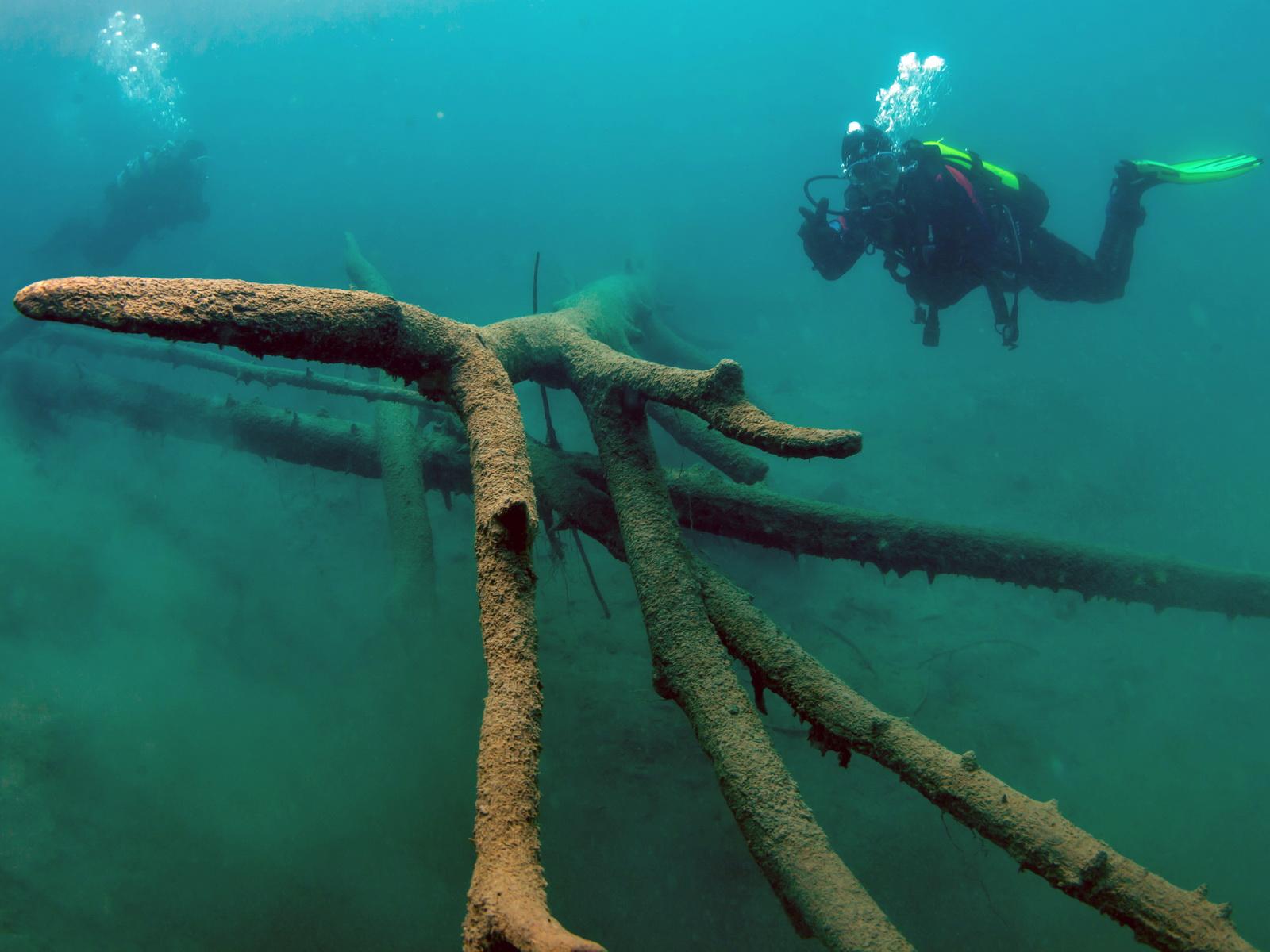Taucher bewundern die Baumstämme im Blausee