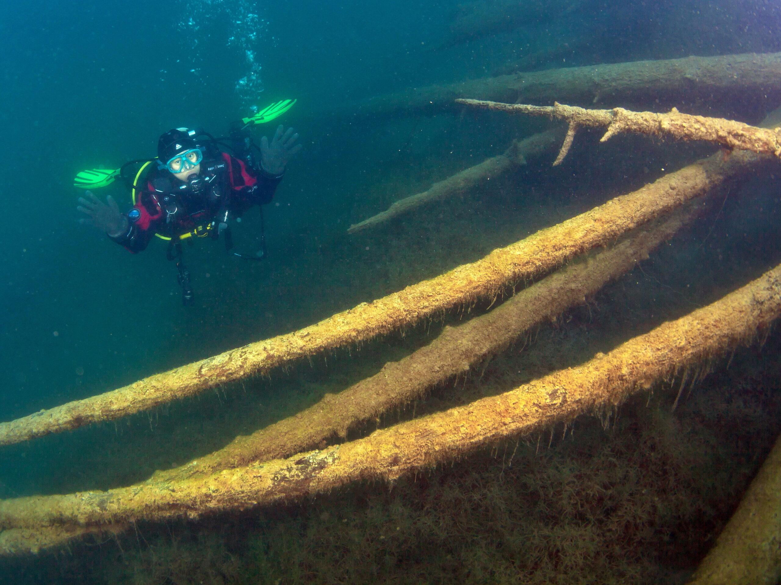 Skurrile Baumstämme beim Blausee Tauchen