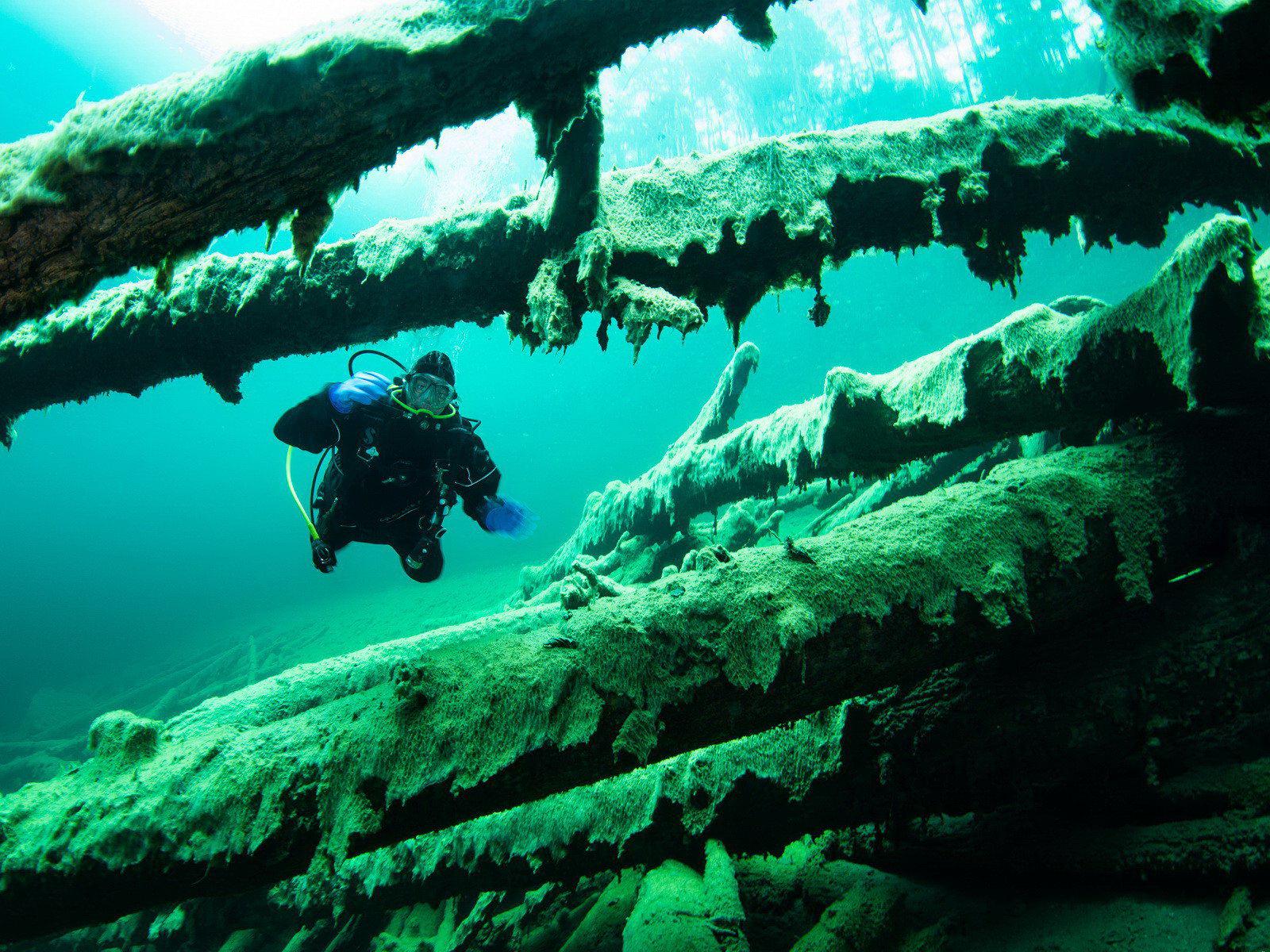 Unterwasserwald beim Bergseetauchen im Fernsteinsee