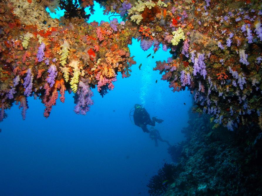 Taucher nähert sich einem Korallenriff