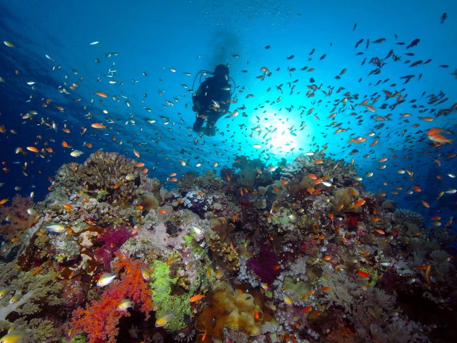 Farbenfrohes Riff mit tausenden Fahnenbarsche