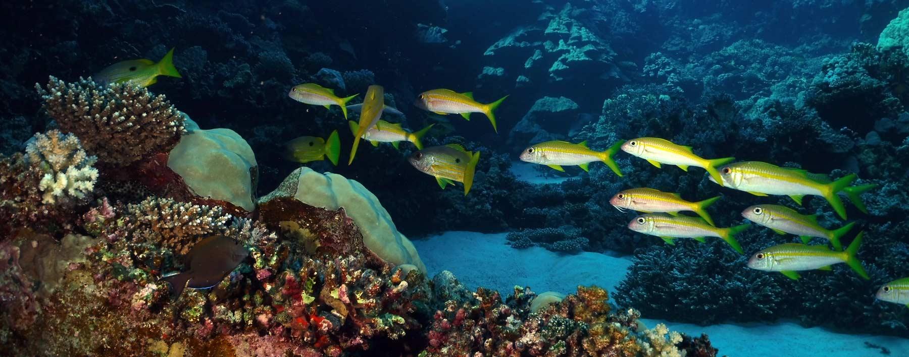 Fische im Korallengarten