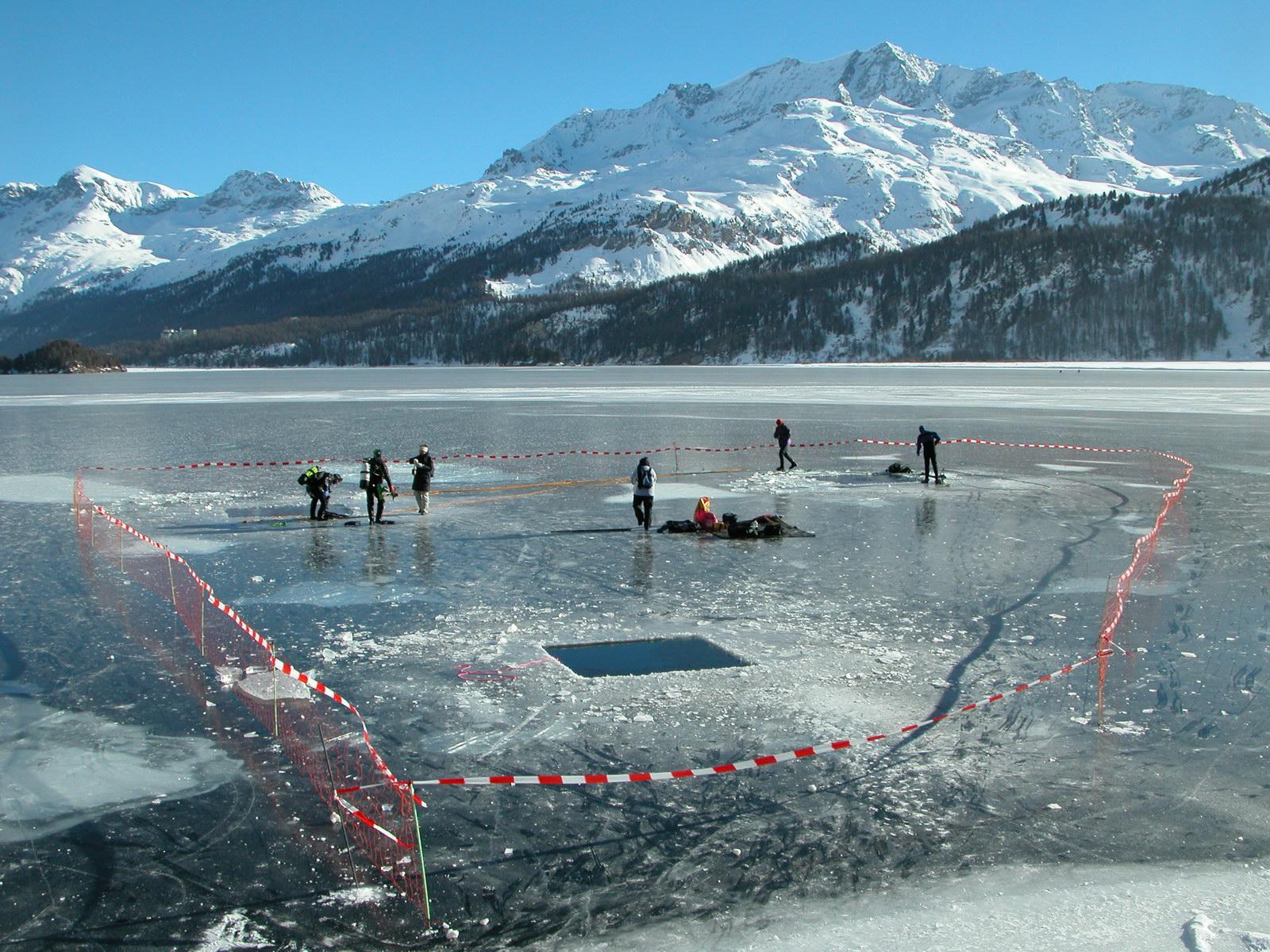 Eistaucher auf dem zugefrorenen Silsersee