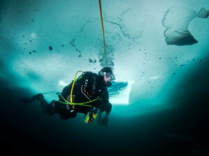 Eistaucher unter blauem Eis