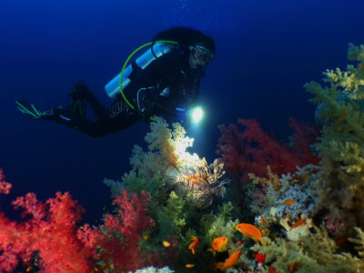 Rotfeuerfisch folgt beim Nachttauchgang