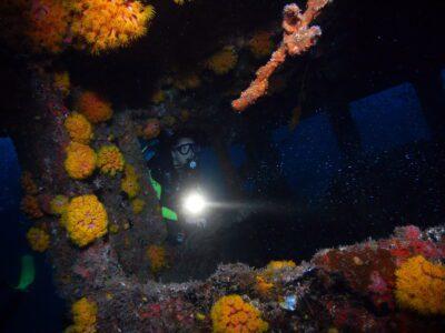 PADI Nachttaucher am korallenbewachsenen Wrack