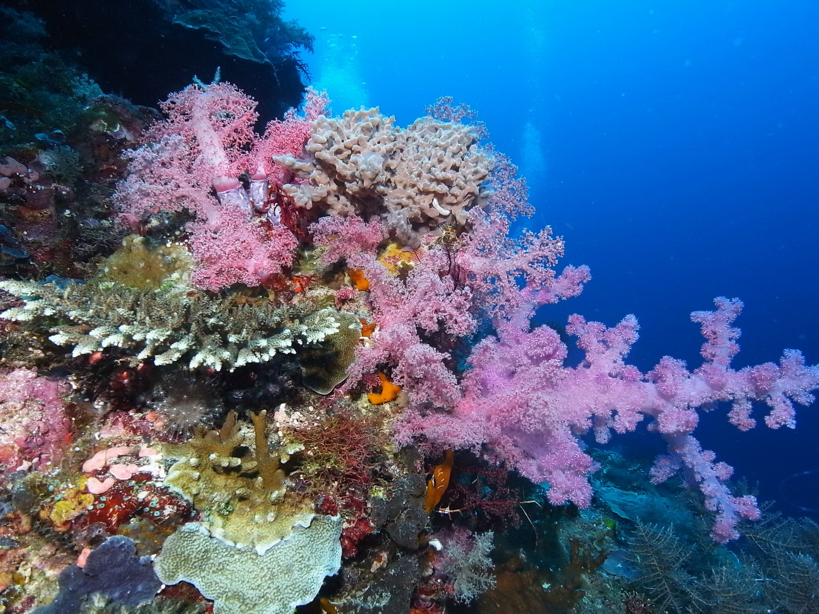 Weichkorallen fotografiert im Unterwasserfotografie Kurs