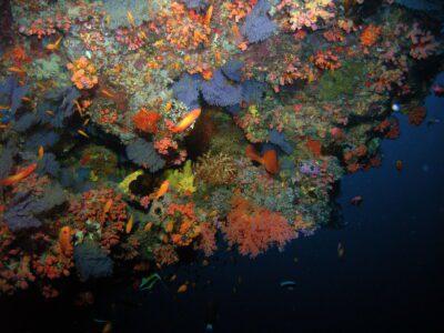 Unterwasserfoto zeigt Korallen bewachsene Wand
