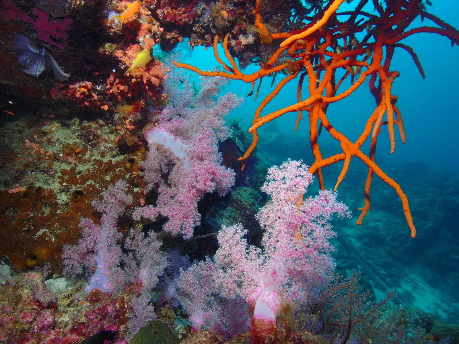 Weitwinkel Unterwasserkamera Aufnahme von Korallen