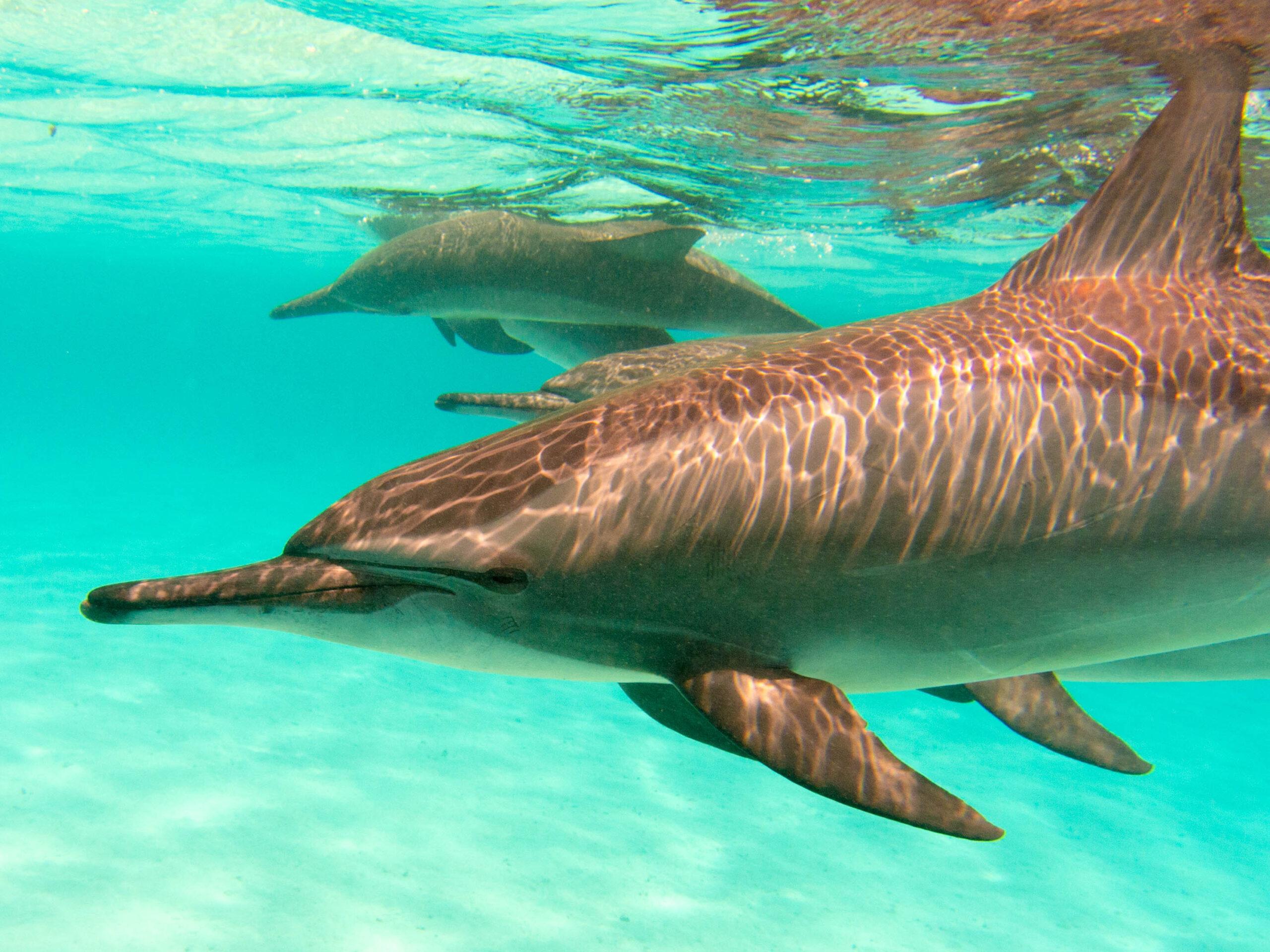 Delphine im kristallklaren Wasser