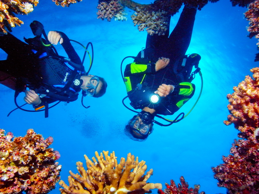 Taucher, die auf Korallen herunterschauen.